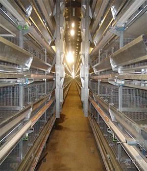 郑州H型蛋鸡笼厂家