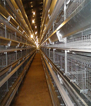 h型蛋鸡笼生产厂家