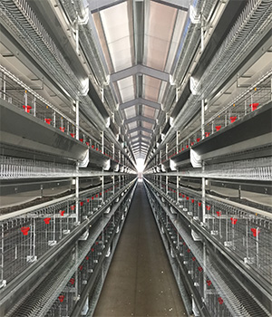 层叠式鸡笼厂家