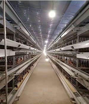 蛋鸡养鸡设备喂养和饮水存在的问题和解决方法。