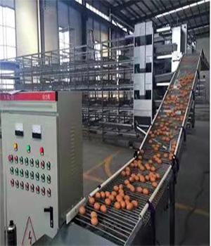 养鸡设备生产厂家-中央集蛋线