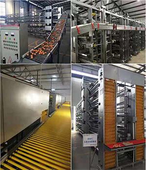 中央集蛋线-养鸡设备生产厂家