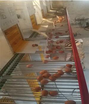 郑州养鸡设备厂家