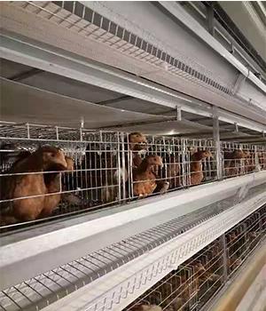 养鸡设备生产厂家