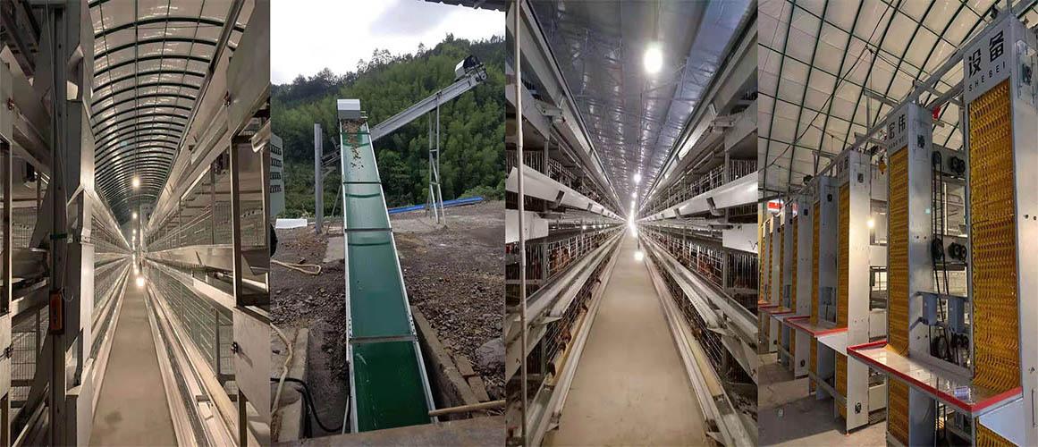 养鸡设备生产厂家,蛋鸡笼批发价格,郑州全自动捡蛋机